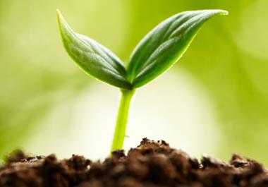 Sprout Survival Free Stock Photo - Public Domain Pictures