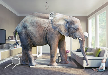 It's a radical idea to have an elephant for a pet.