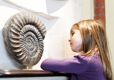 The girl is studying the fossil on exhibit.