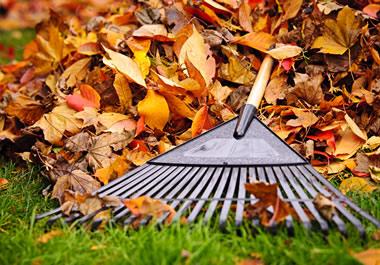 A rake on a pile of leaves