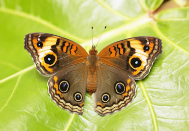 The butterfly's wings are symmetrical.