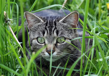 The cat is lurking in the grass.