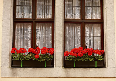 Windows with lacy curtains