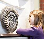 On exhibit Illustration