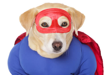 The dog is wearing a superhero getup.