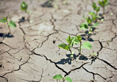 Drought conditions threaten new crops