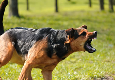 Aggressive dog showing its teeth
