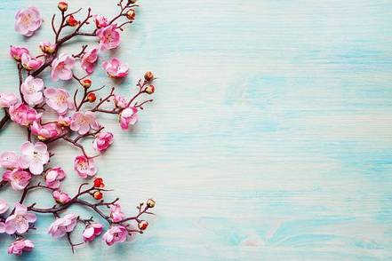 pink-flowers-on-blue-background