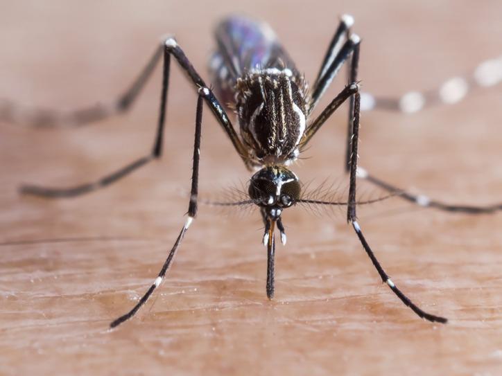 Words We Re Watching Zika Virus Merriam Webster