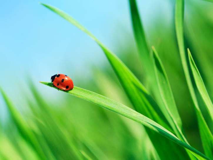 What The Origin Of The Word Ladybug Has To Do With Christianity Merriam Webster