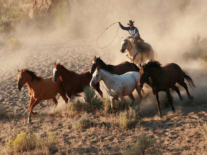 картинки дикого запада диких лошадей объяснила это