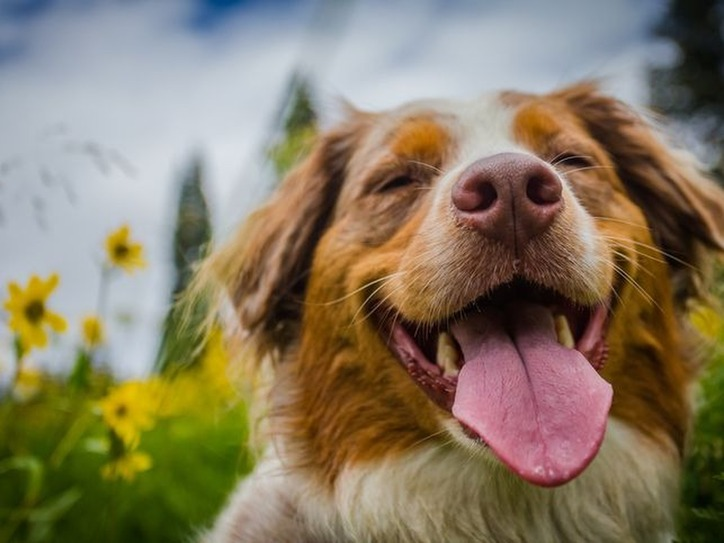 14 Words Inspired By Dogs Merriam Webster