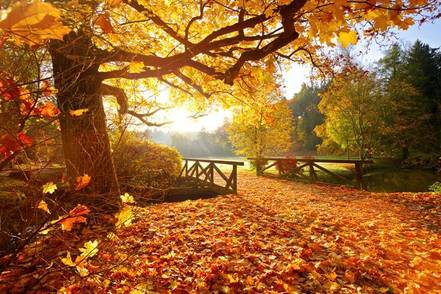 small-bridge-with-fallen-leaves