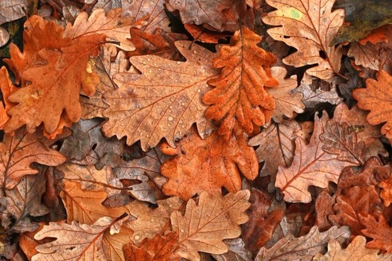 Color Words To Describe Autumn Leaves Merriam Webster