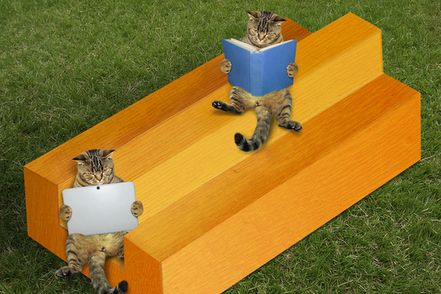 cats on impossible timber